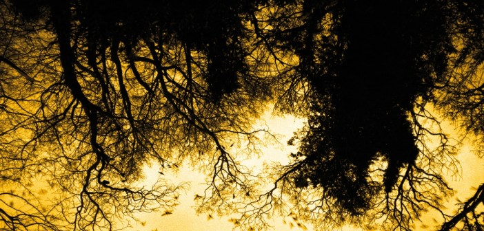 Listen to David Holmes & Jon Hopkins ft. Stephen Rea's 'Elsewhere Anchises'