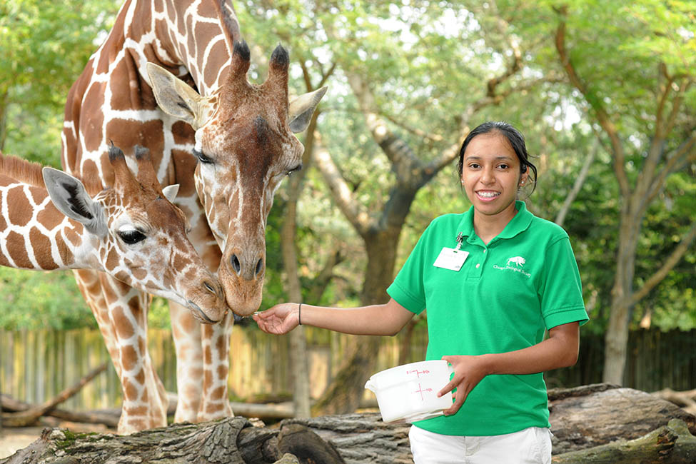 Chicago Zoological Society - Internships Brookfield Zoo