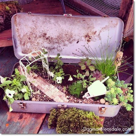 fairy garden with succulens in vintage metal box