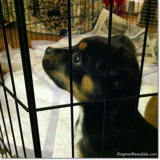 adopt a dog from Recycled Paws, Mohegan Lake, NY