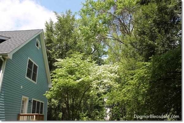 Blue Cottage Backyard, DagmarBleasdale.com