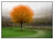 A tree turning colour on the front yard of Queen's Park: an example of the photo impressionism technique in the round