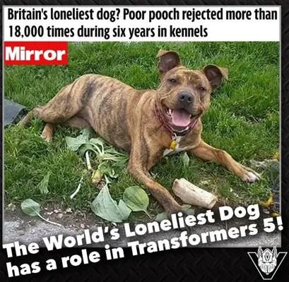 Worlds Loneliest Dog