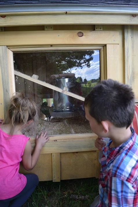 James Davis's new chicken coop is complete with a viewing window so he can watch for eggs.