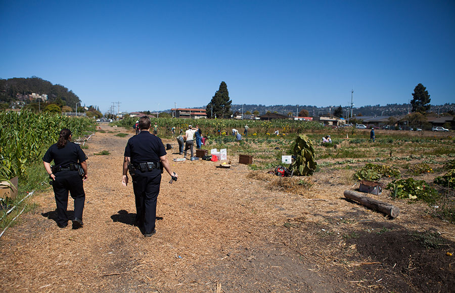 Police officers watch members of Occupy the Farm tend to crops at the Gill Tract on Nov. 9th.