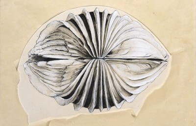 Jay DeFeo, After Image, 1970, graphite, gouache, and transparent synthetic polymer on paper with cut-and-torn tracing paper; The Menil Collection, Houston; gift of Glenn Fukushima; © 2012 The Jay DeFeo Trust / Artists Rights Society (ARS), New York, photo: by Paul Hester