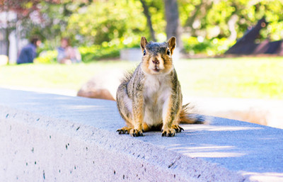 Squirrels_AryaAliabadi