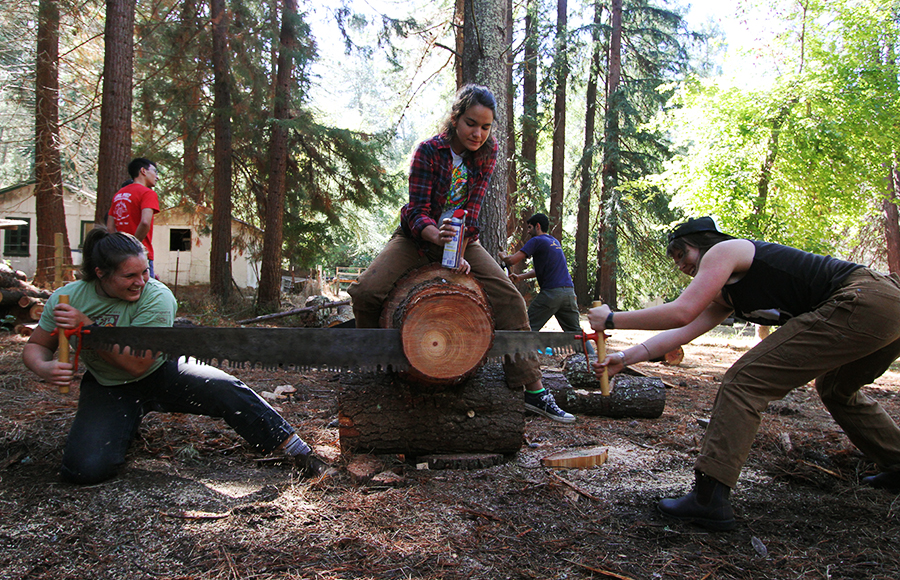 "Madeline Green and Allison Erny practice ""buck-sawing"" with Cal Logging Sports at the Russell Research Station."
