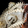 octopus_courtesy