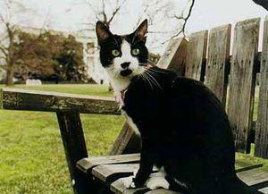 Chelsea Clinton's cat, Socks. Taken by a White...
