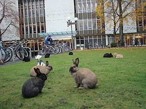 University of Victoria library, bikes, and rabbits. (Photo credit: Wikipedia)