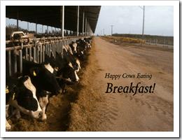 happy-cows-beakfast