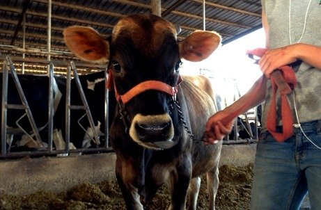 Dairy Farmers Care