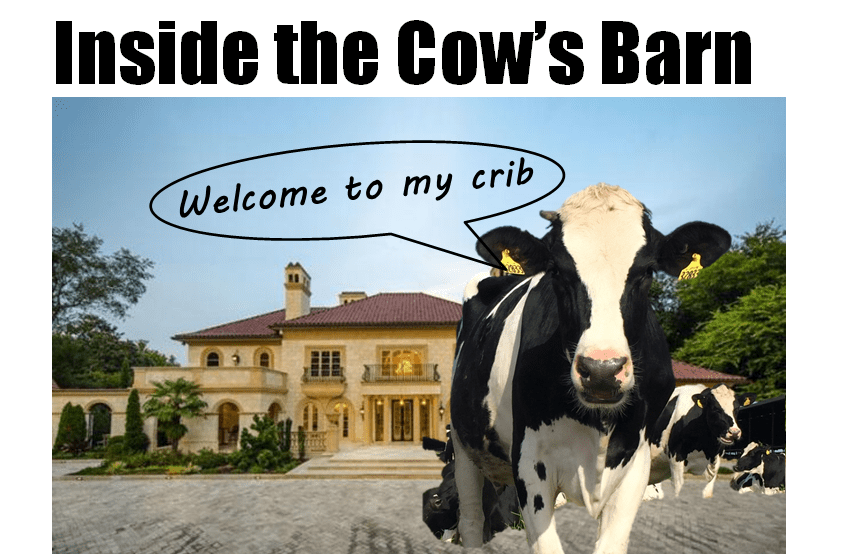 The Luxurious Life Of Dairy Cows