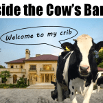 Inside a Modern Dairy Cow Barn