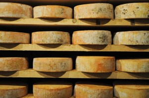 great and original forms of Fontina , typical Italian mountain cheese from the Aosta Valley,fonduta