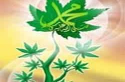 pohon-muhammad