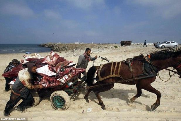 """Nelayan Palestina mengangkut beberapa ikan pari jenis """"Mobula Ray"""" yang terdampar di pantai Gaza City, 27 Februari 2013. (AFP/Getty Images)"""