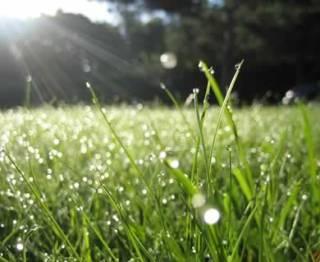 bumi-rumput-embun-pagi