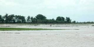 9.832 Hektar Sawah di Bekasi Terendam Banjir (Foto: RISKY/RADAR BEKASI)