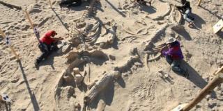 Kerangka paus ditemukan dalam keadaan lengkap di Cile. - Foto: kompas.com