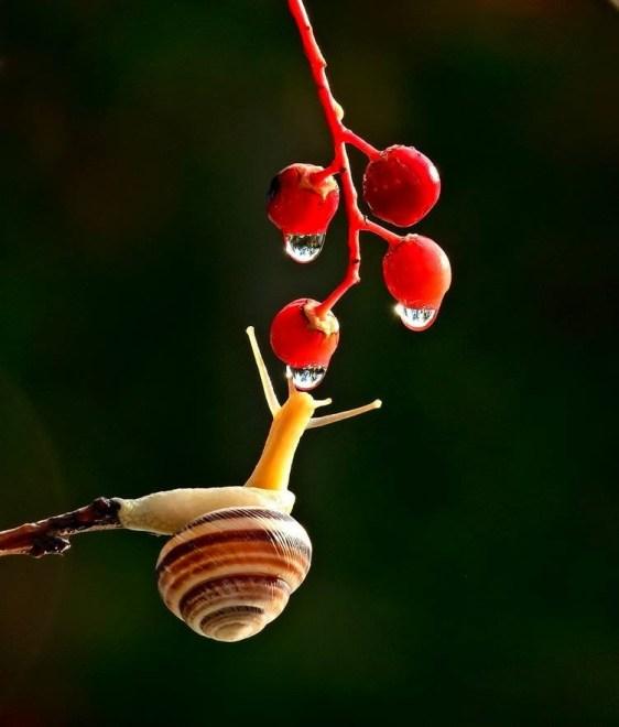 snail-13