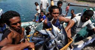 Ikan hasil tangkapan nelayan. (viva.co.id)