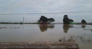 Banjir di Myanmar telah menghancurkan lebih dari satu juta hektar lahan pertanian. (kai/sasa/kis/pkpu)