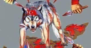 turki terluka