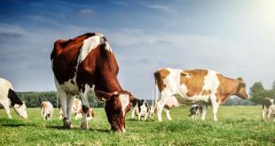 hewan kurban yang sehat dan tidak bisa diketahui secara kasat mata. (kompas.com)