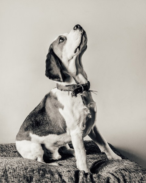 Portrait of Burt Swan the dog