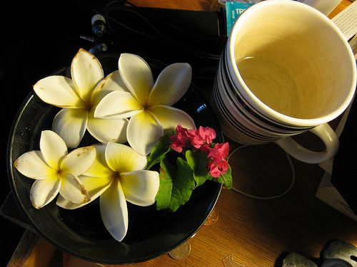 Plumerias and a coffee mug.