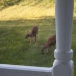 140829-deer-001