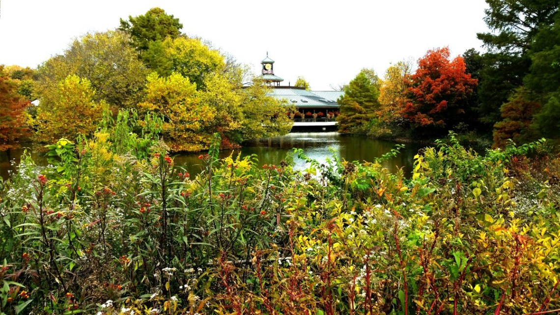 St. Louis Zoo in the Fall