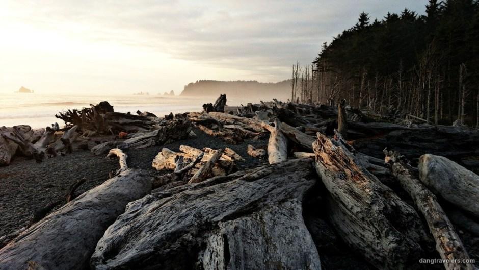 Shi Shi Beach Driftwood - Olympic National Park