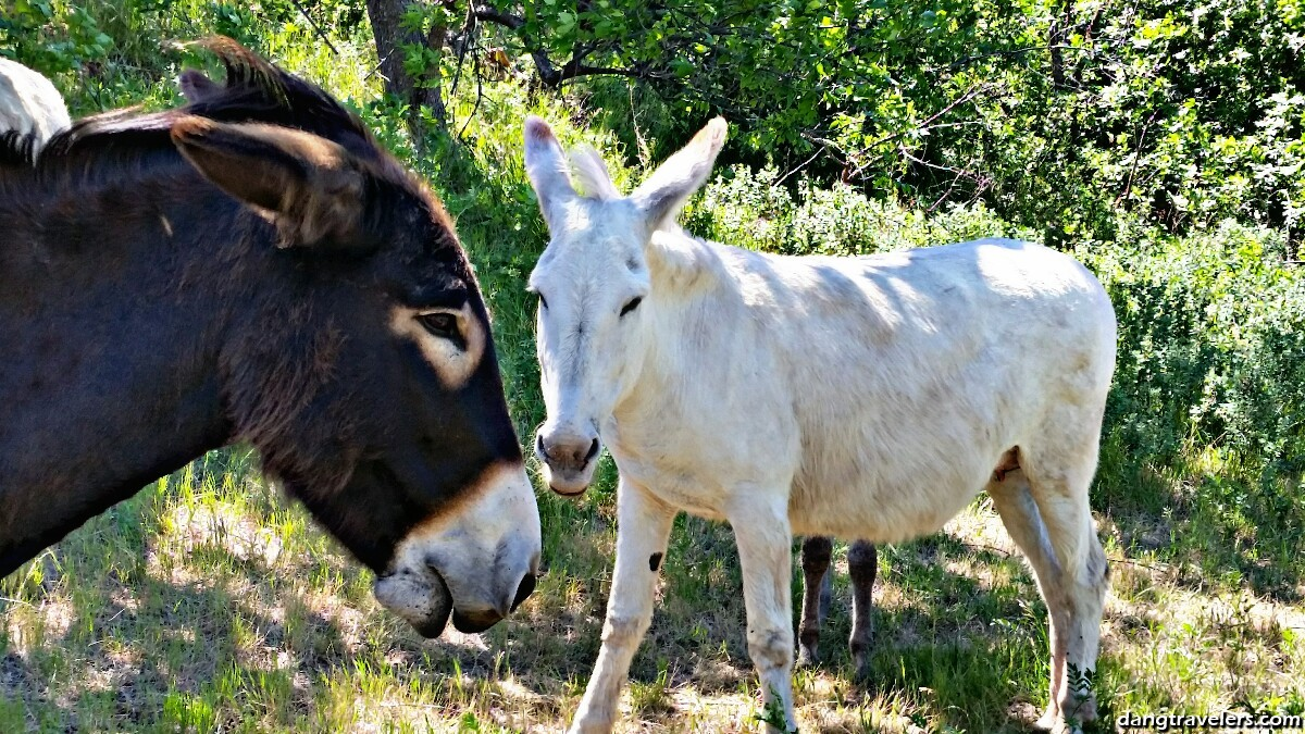 Summer Road Trip, Day 4: Introduction to Custer State Park