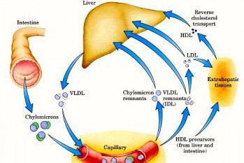 figure_lipoproteins-formaat