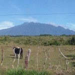 Volcán Barú, or the highest point in Panama, as seen from the orange plantation in Potrerillos Abajo.