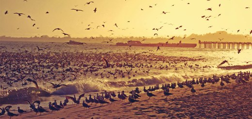0491_Sunset_Birds_Seacliff_June_22_2014