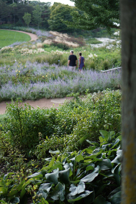 Evening Island, Chicago Botanic Garden / Darker than Green