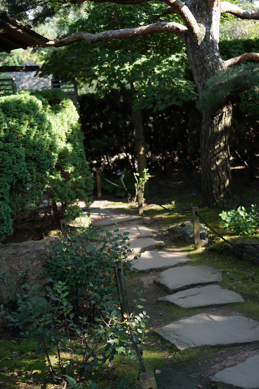 Japanese Garden, Chicago Botanic Garden / Darker than Green