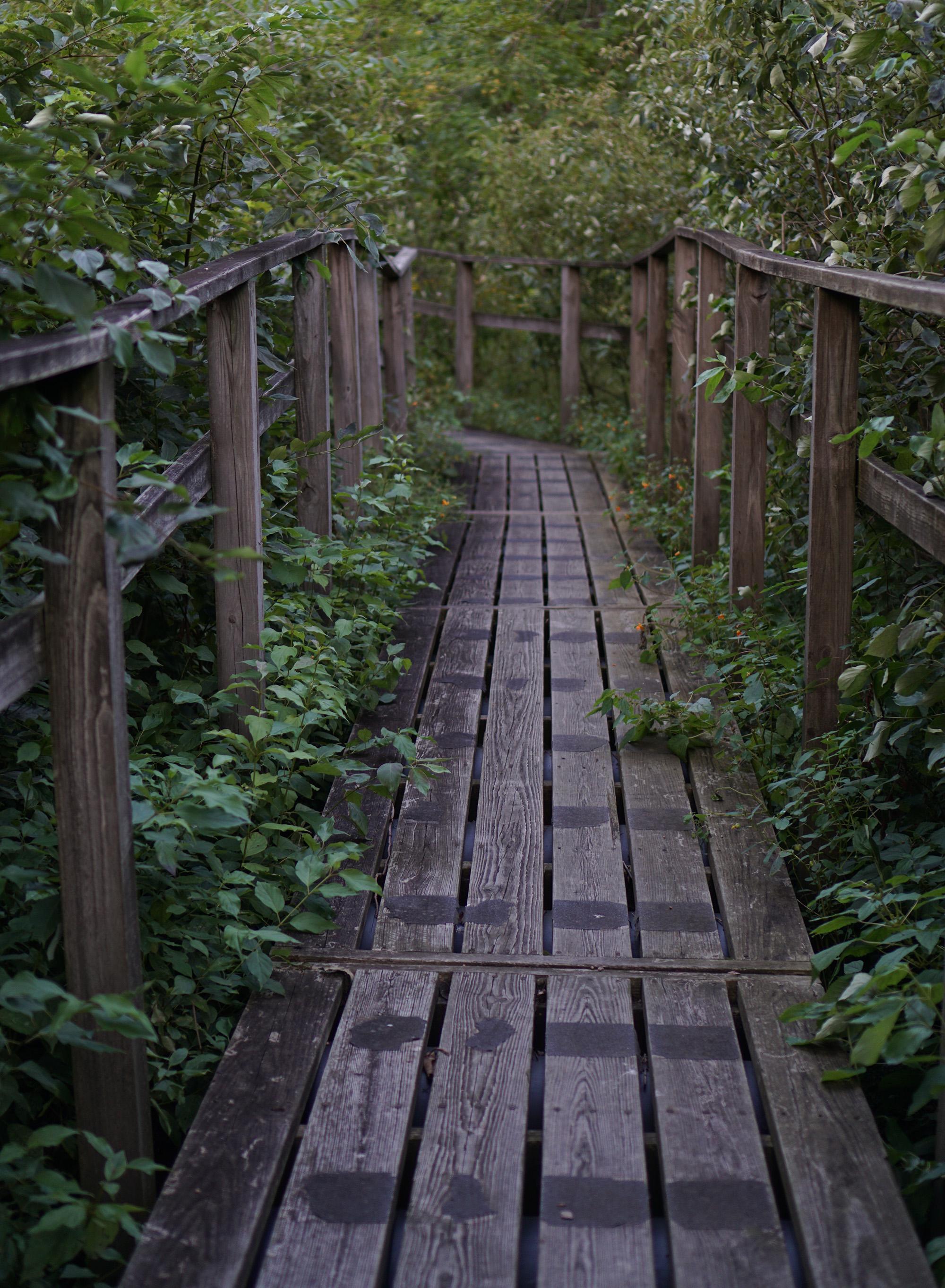 McDonald Woods, Chicago Botanic Garden / Darker than Green