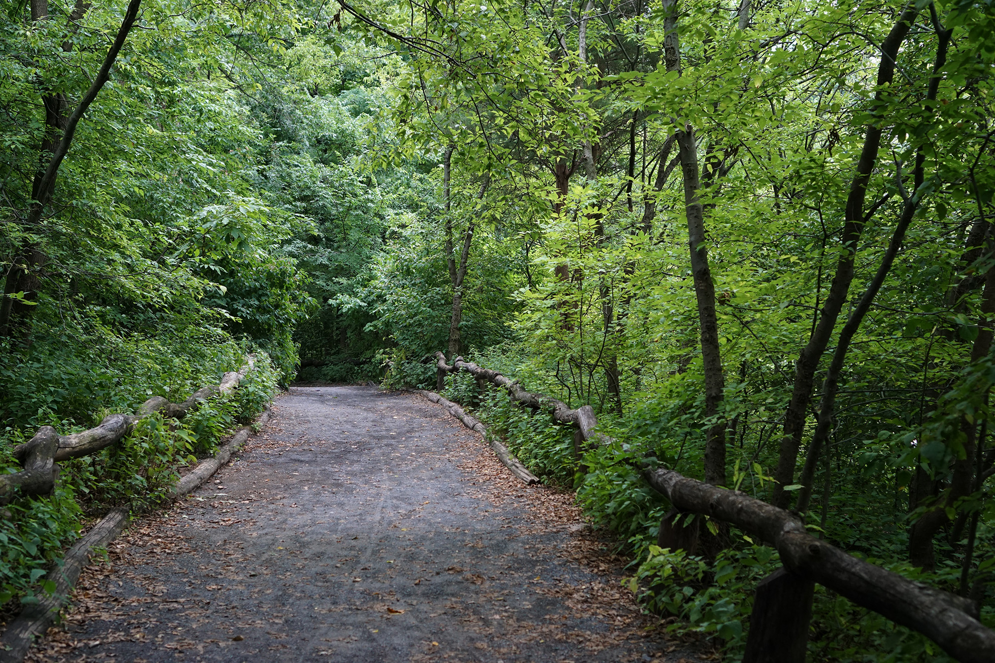 The Ramble, Central Park, New York City / Darker than Green