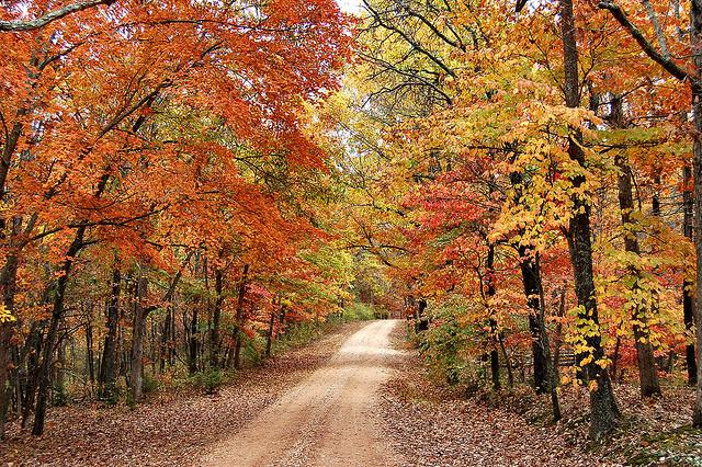 Fall Pumpkin Patch Wallpaper 2014 Fall Running Races In Vermont S Northeast Kingdom