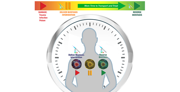 Slowing Biological Time to Extend the Golden Hour for Lifesaving