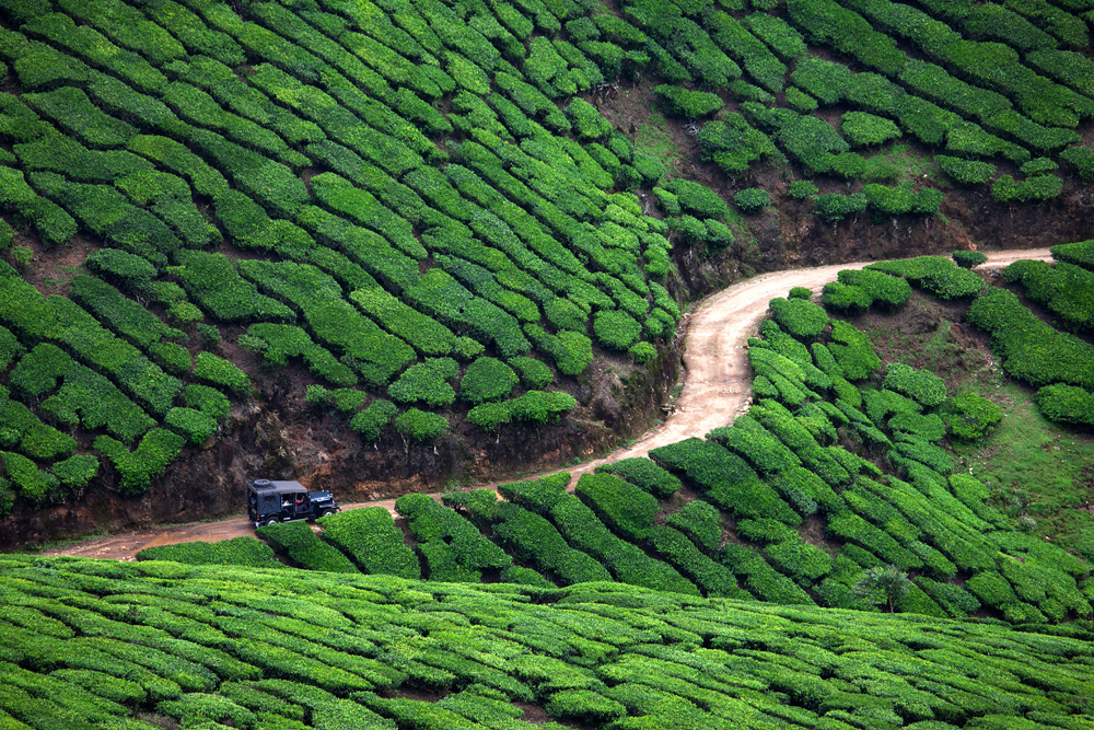 Ooty Hd Wallpapers Photo Of The Day A Tea Estate In Munnar Darter Photography