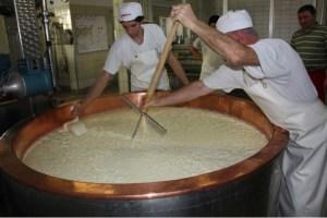 Emmentaler Käse Käseharfe Bruch schneiden