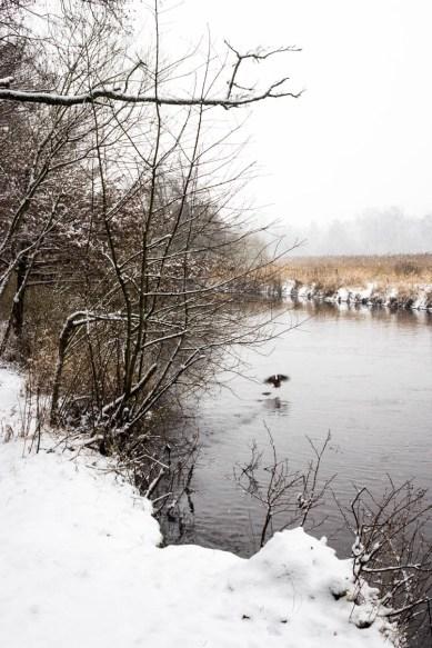 Winter 2016 (37 von 102)