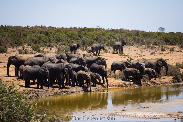 Addo Elephant Park (157 von 307)