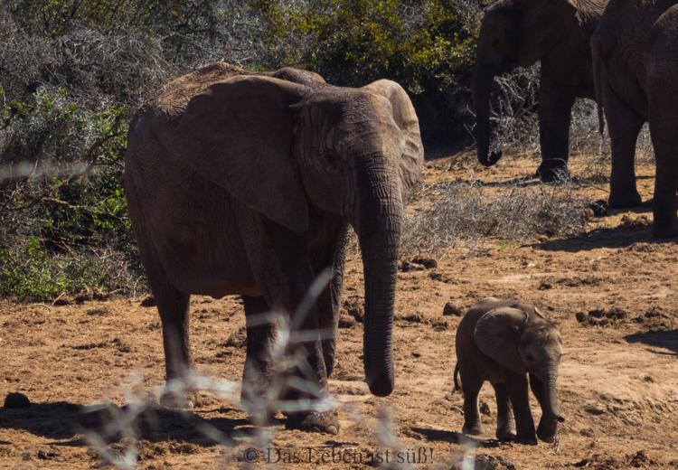 Addo Elephant Park (262 von 307)